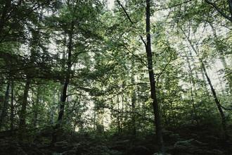 Nadja Jacke, Wald im Furlbachtal im Juni (Deutschland, Europa)