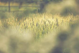 Nadja Jacke, Gras in der Sommersonne (Deutschland, Europa)
