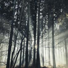 Nadja Jacke, Lichtstrahlen im Teutoburger Wald (Deutschland, Europa)