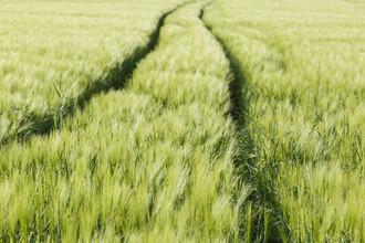 Getreidefeld - fotokunst von Robert Vogt