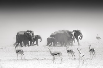 Tillmann Konrad, The Group (Namibia, Africa)