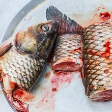 Marie Joelle Nimmesgern, Fish On Plate (Vietnam, Asien)