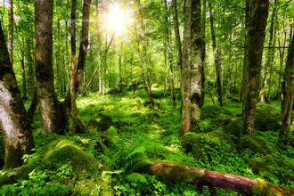 Thomas Herzog, German forest (Germany, Europe)