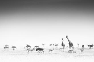 Tillmann Konrad, Eden (Namibia, Africa)