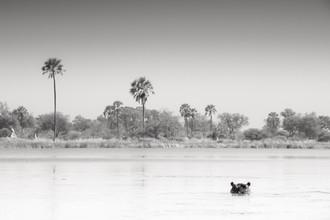 Tillmann Konrad, Watching you! (Botswana, Africa)