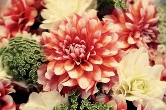 Rolf Bökemeier, Blumen (Vereinigte Staaten, Nordamerika)
