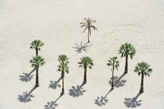 Palm trees - Fineart photography by Daniel Schoenen