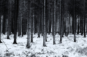 Andreas Odersky, #forest(3) (Germany, Europe)