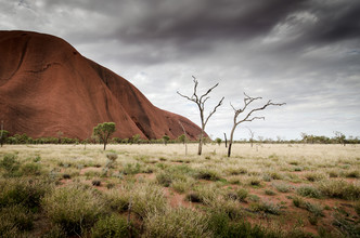 Christian Seidenberg, The Tree at Ayers Rock (Australien, Australien und Ozeanien)