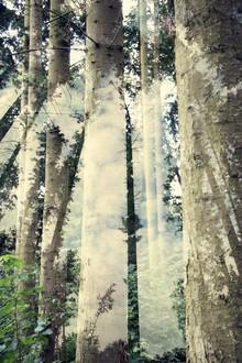 Rolf Bökemeier, Waldimpressionen (Deutschland, Europa)