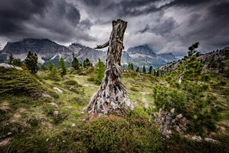Markus Van Hauten, The last one... (Italien, Europa)