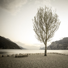 Sebastian Rost, einsamer Baum (Italien, Europa)