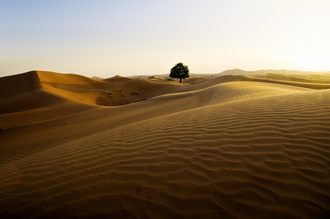Daniel Schoenen, Wüste (Oman, Asien)
