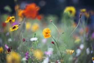Nadja Jacke, farbenfrohes Sommerblumenbeet (Deutschland, Europa)