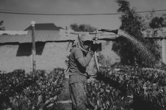 Daniel Flamme, Kambodschanische Feldarbeiterin (Kambodscha, Asien)