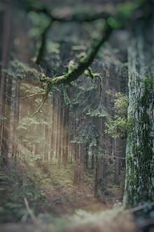 Andreas Odersky, Baum (Deutschland, Europa)