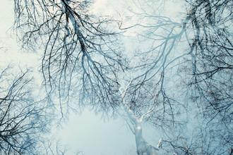 Nadja Jacke, Baumkronen und winterlicher blauer Himmel (Deutschland, Europa)
