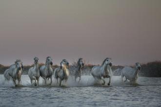 Nicolas De Vaulx, wild horses (France, Europe)