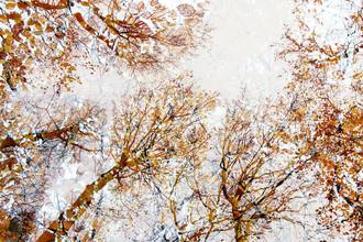 Nadja Jacke, Sky full orange bright autumn leaves (Germany, Europe)