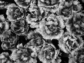 Rolf Bökemeier, Blütenpracht in schwarzweiss (Deutschland, Europa)