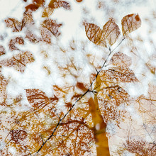 Nadja Jacke, Herbstlicher Wald (Deutschland, Europa)