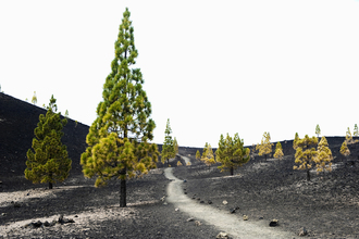 Daniel Schoenen, der Weg zum Vulkan (Spanien, Europa)