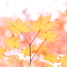 Torsten Kupke, Herbstfarben (Deutschland, Europa)