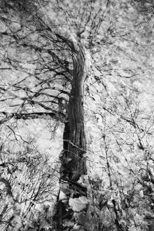 Rolf Bökemeier, Der Baum (Deutschland, Europa)