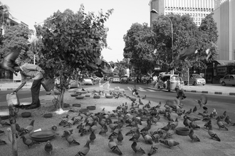 Pigeons - Fineart photography by Jagdev Singh