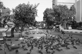 Jagdev Singh, Pigeons (Indien, Asien)