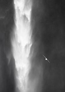 Jens Rosbach, Isländischer Wasserfall mit Vogel (Island, Europa)