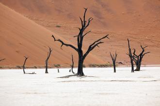 Angelika Stern, Dead Vlei, Namibia (Namibia, Afrika)