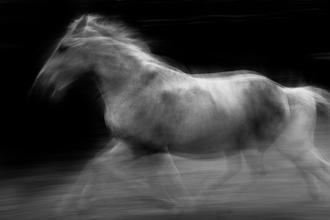 horse impression - fotokunst von Raffaella Castagnoli