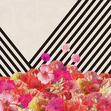 Floraline V - fotokunst von Bianca Green