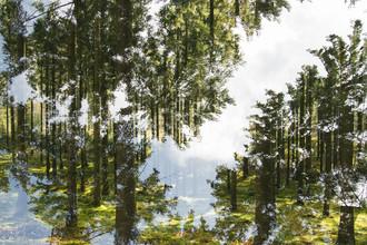 Nadja Jacke, Sky in the Teutoburg Forest (Germany, Europe)