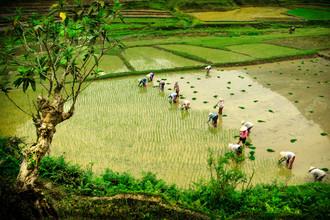 Thomas Junklewitz, Feldarbeit (Vietnam, Asia)