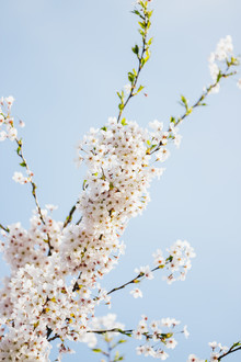 Nadja Jacke, Rosa-Blauer Frühlingshimmel (Deutschland, Europa)