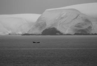 Jens Rosbach, Antarktischer Wal (Antarktis, Europa)