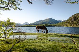 Marco Entchev, Patagonia - Horse (Argentinien, Lateinamerika und die Karibik)