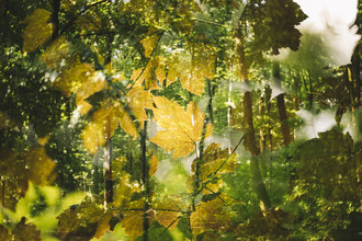 Nadja Jacke, The double summer forest (Germany, Europe)