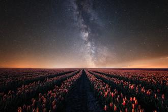 Oliver Henze, Die Milchstraße und das Tulpenfeld (Deutschland, Europa)
