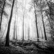 Christian Janik, FRANKFURT FOREST - FRANKFURT (Germany, Europe)