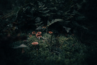 Steven Ritzer, Mushrooms in moody forest (Germany, Europe)
