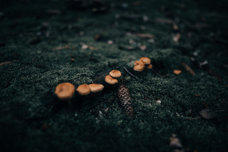 Steven Ritzer, Mushrooms in a moody forest Prt. 2 (Germany, Europe)
