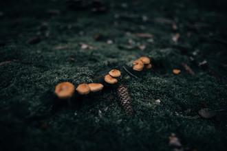 Steven Ritzer, Mushrooms in a moody forest Prt. 2 (Deutschland, Europa)