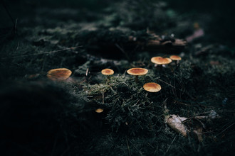 Steven Ritzer, Mushrooms in a moody forest Prt. 3 (Germany, Europe)