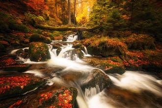 Oliver Henze, Flüssiger Herbst (Deutschland, Europa)