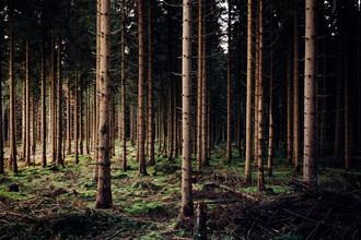 Oliver Henze, Waldlichter (Deutschland, Europa)