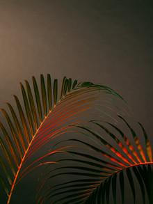 Stéphane Dupin, Palms Fever (France, Europe)