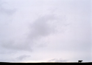 a vaca - fotokunst von Andreas Weiser